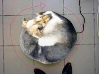 33_chien-tourne.jpg